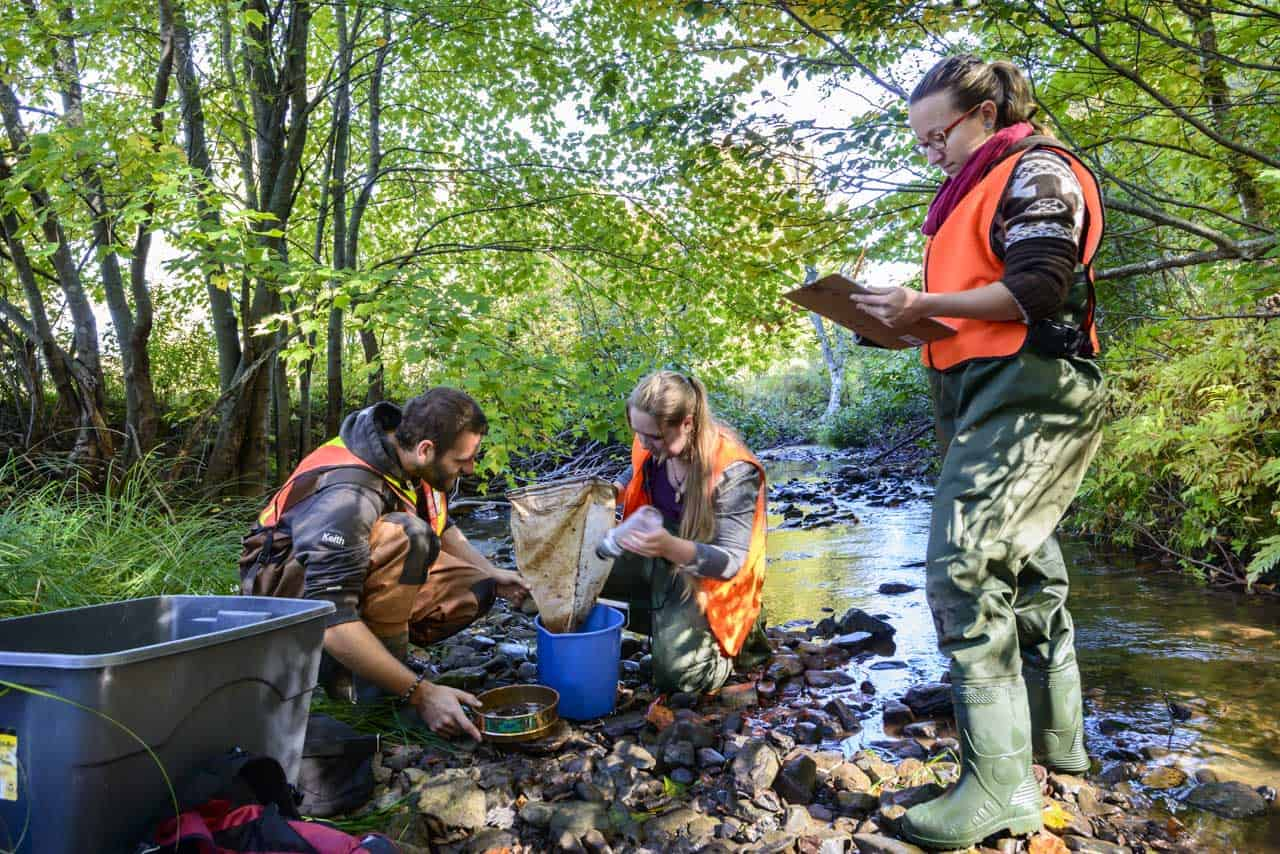 Invertebrates sampling - Shediac Bay Watershed Association
