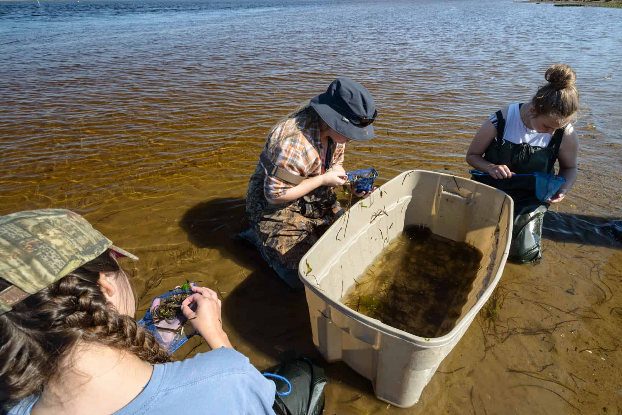 Community Aquatic Monitoring Program - Shediac Bay Watershed Association