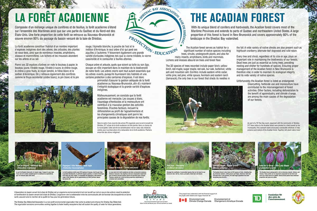Photos for 6 Acadian Forest species (bottom of interpretation panel) - Design, Brian Branch