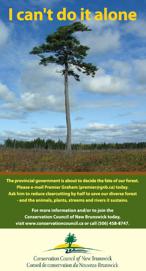 Forest clearcutting awareness ads - Co-writing, photo of tree and design