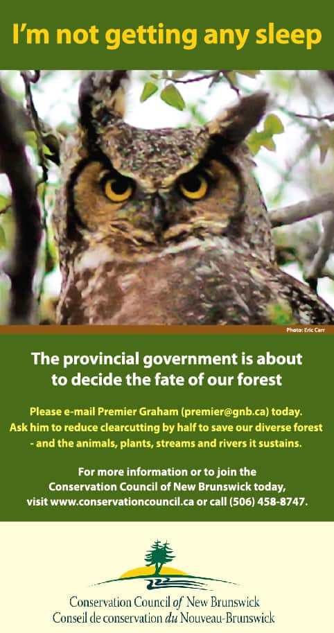 Forest clearcutting awareness ads - Co-writing and design